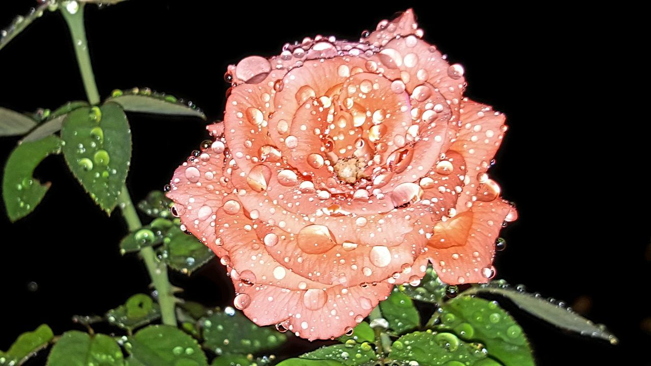 Pink Roses With Rain Drops Pink Rose Flower Pink Roses Taking Photos Check This Out Photography #photo #photos #pic #pics #tagsforlikes #picture #pictures #snapshot #art #beautiful #instagood #picoftheday #photooftheday #color #all_shots #exposure #composition #focus Capture Moment [ First Eyeem Photo Getty X EyeEm Images Eyeemphotography Phonephotography Eyeemphotography Getty & Eyeem Epic Shot Photography EyeEm Gallery Flowers#nature#hangingout#takingphotos#colors#hello World#flora#fauna Showcase April Flowers Photography EyeEm Flowers Lover Eyeem Roses Rose🌹 EpicShotPhotography EyeEm Best Shots Photography Getty+EyeEm Collection Getty Images Epic Pics