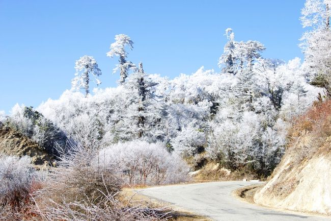 frozen Clear Sky Tree Road Beauty In Nature Nature Non-urban Scene Growth Scenics Tranquil Scene Blue Day Tranquility Remote Travel Destinations Outdoors Solitude Sky Mountain The Way Forward Mountain Range Snow Ice Iced Freezing Cold