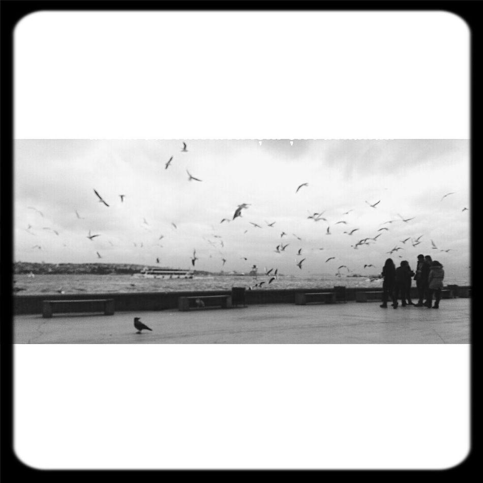 MSGSU Fly Seagulls