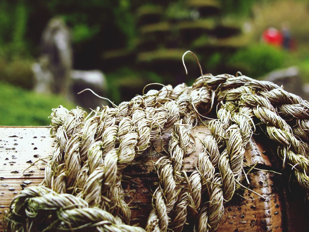 Tied up Tied Together Knot Knotted Bamboo Sisal Rope Focus On Foreground Close-up Pattern, Texture, Shape And Form Canon Outdoors Nature Park Asian Garden