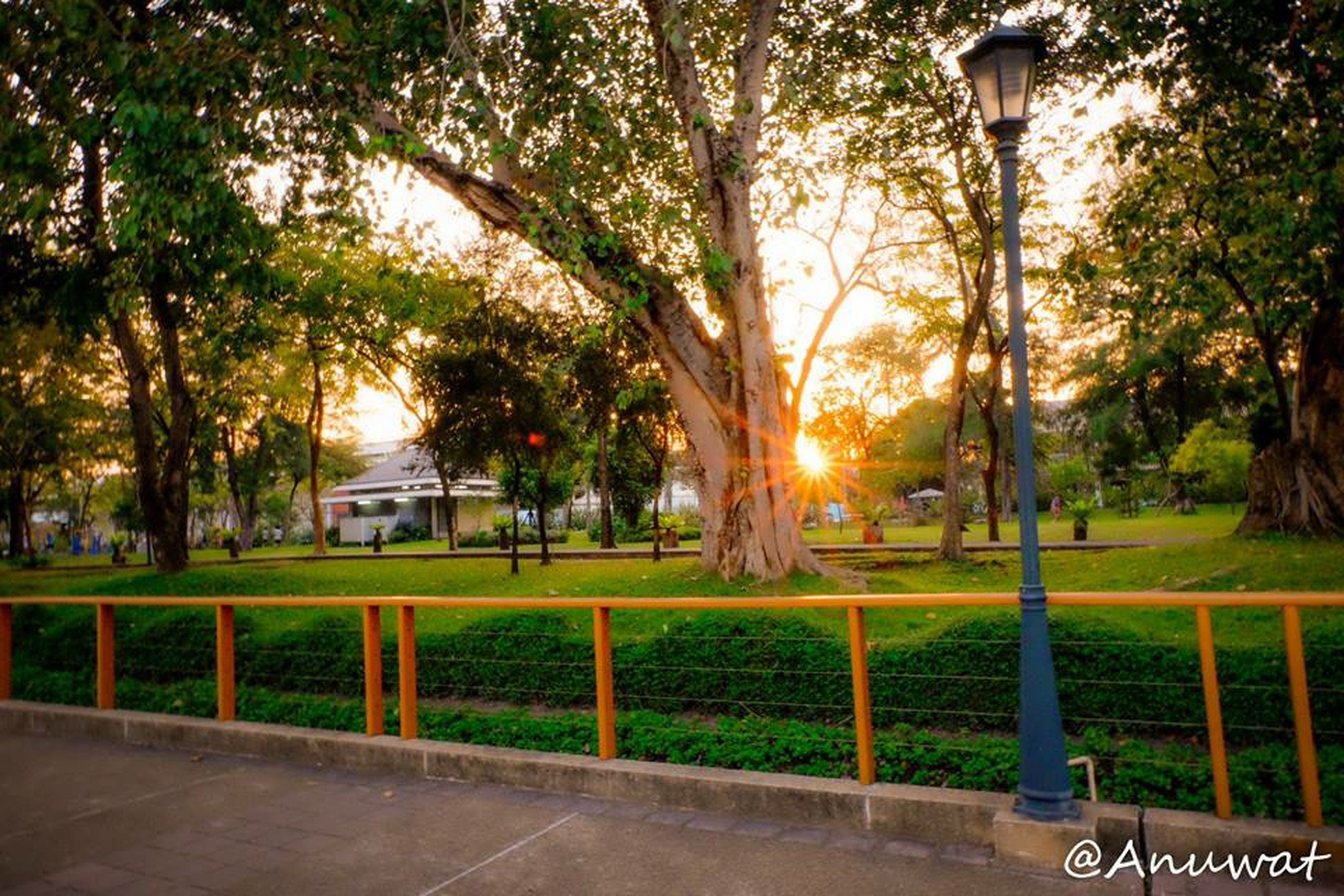 tree, grass, park - man made space, sun, sunlight, growth, tranquility, fence, nature, sunset, beauty in nature, lawn, tranquil scene, branch, field, street light, park, sunbeam, scenics, tree trunk