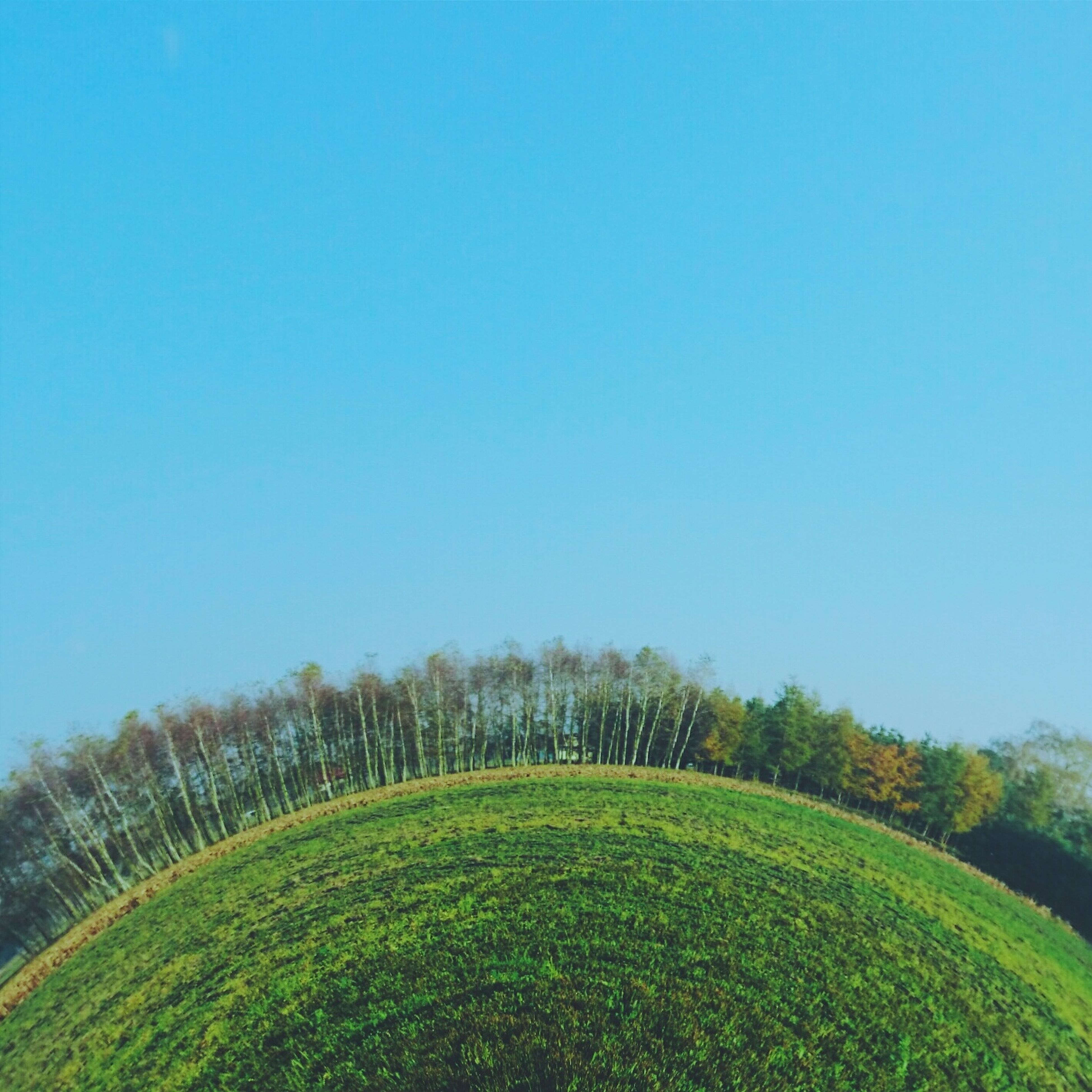 clear sky, copy space, tree, blue, growth, tranquility, tranquil scene, beauty in nature, green color, nature, field, landscape, scenics, grass, green, plant, day, outdoors, idyllic, no people