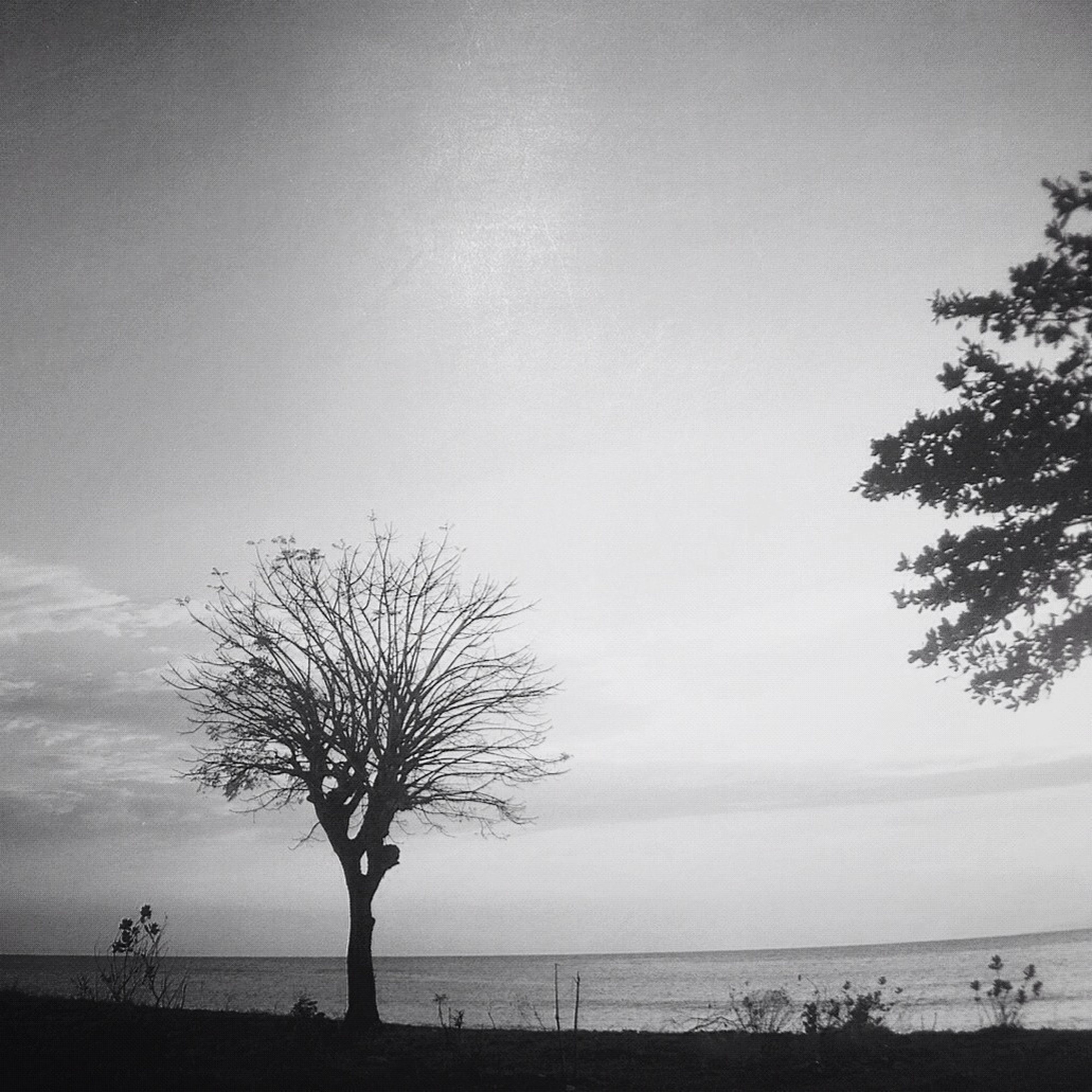 sea, horizon over water, tranquility, tranquil scene, water, tree, beach, scenics, beauty in nature, nature, silhouette, sky, shore, branch, clear sky, idyllic, vacations, copy space, tree trunk, incidental people