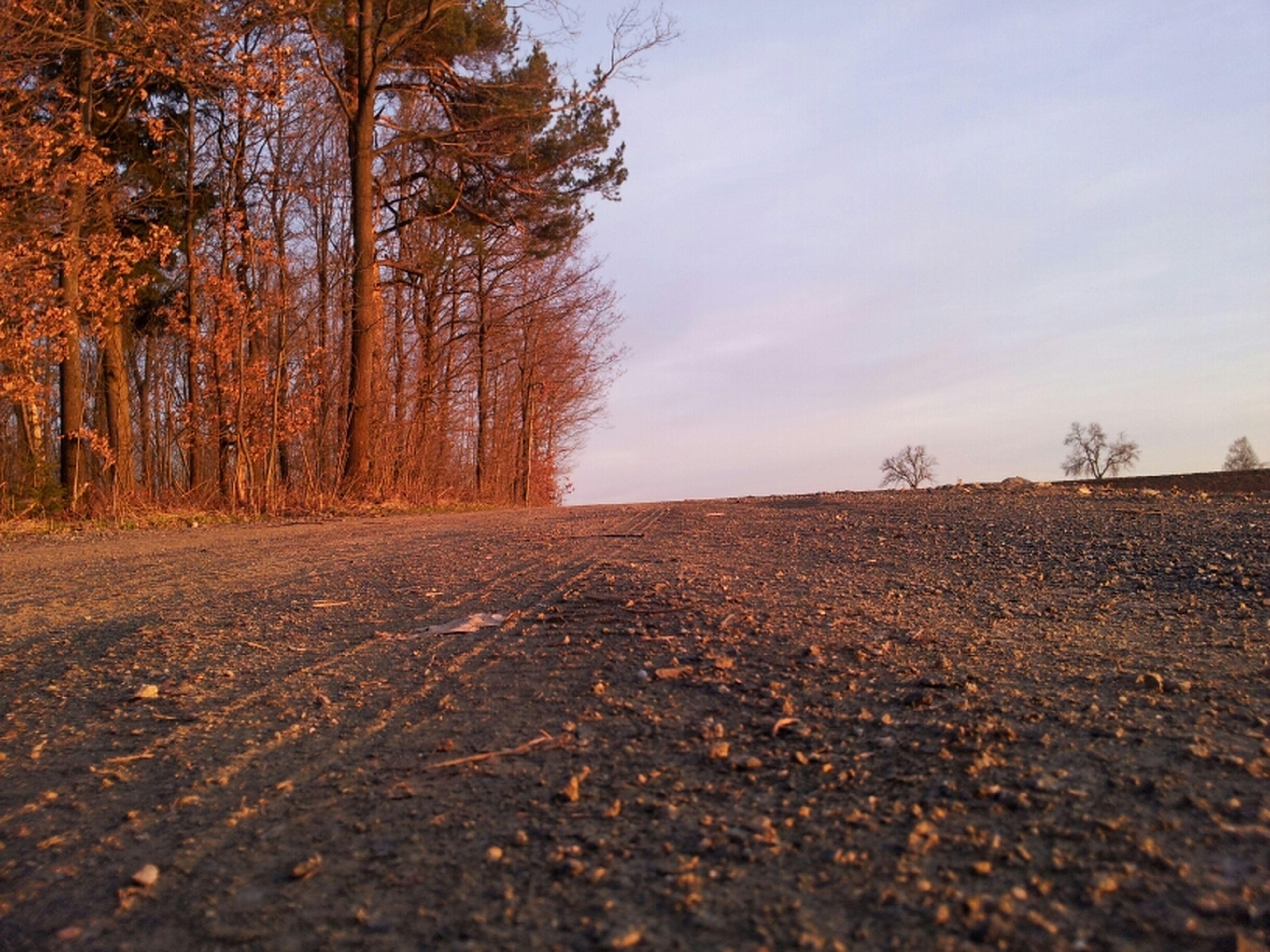 Wald Sundown The Purist (no Edit, No Filter) EyeEm Nature Lover