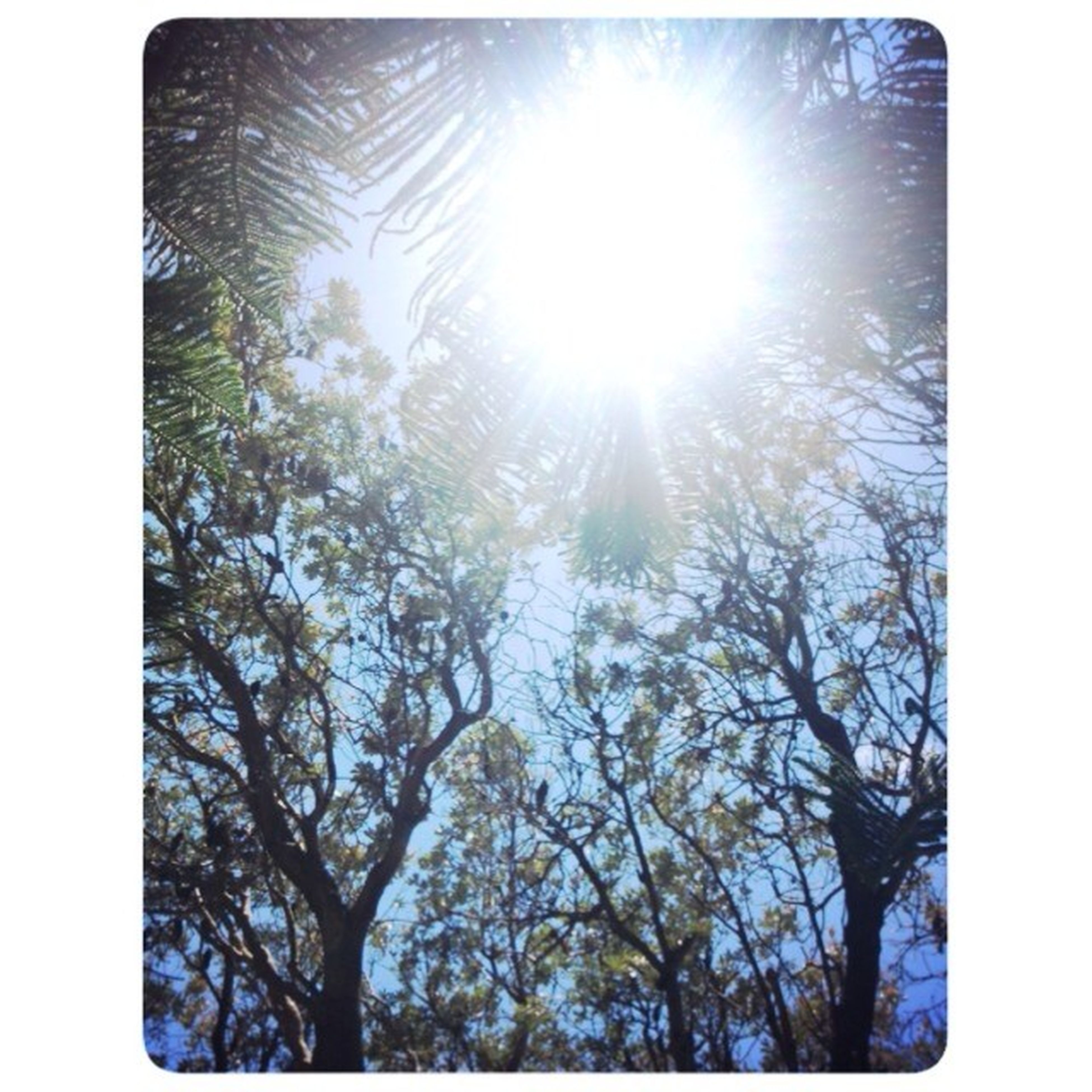 transfer print, sun, tree, low angle view, sunbeam, sunlight, auto post production filter, lens flare, nature, branch, growth, bright, tranquility, beauty in nature, sunny, sky, clear sky, day, no people, outdoors
