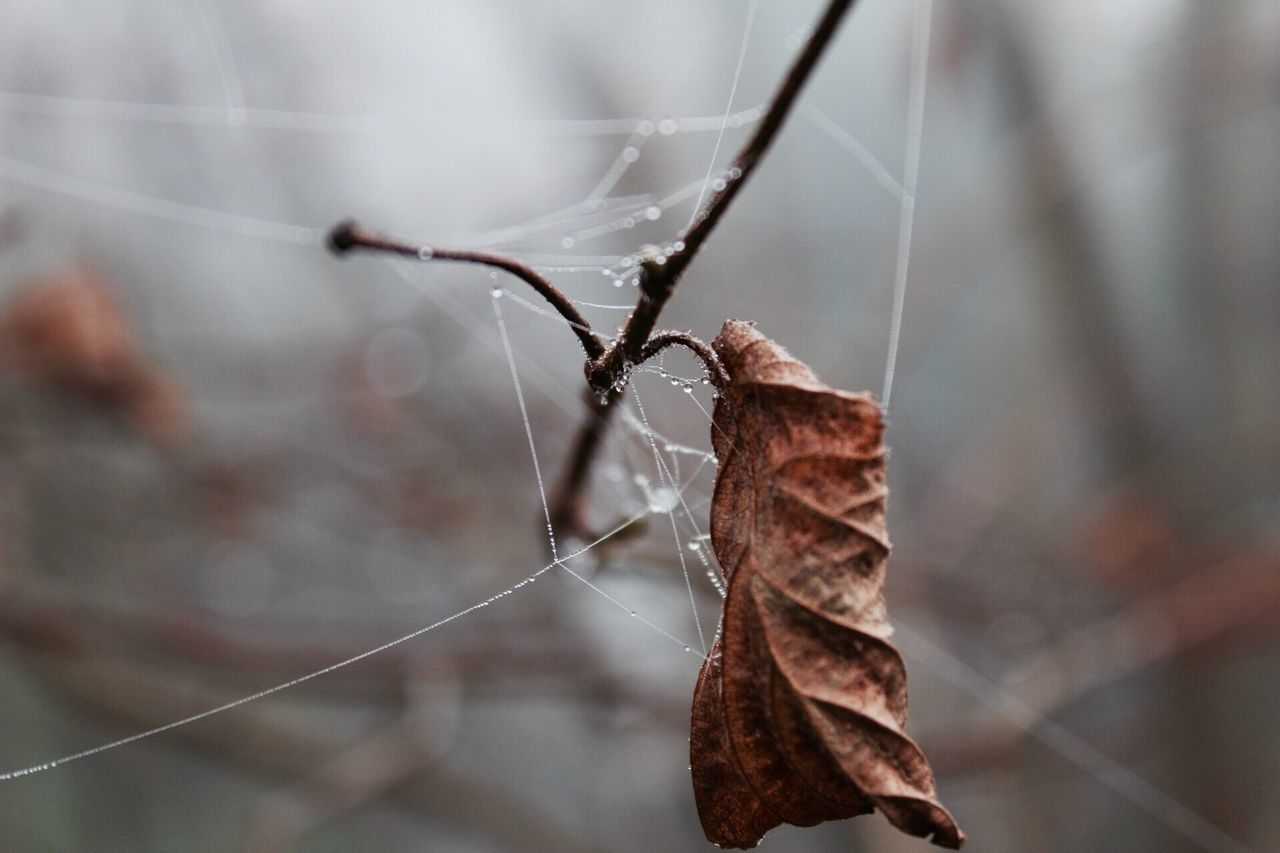 Spider Web Focus On Foreground Close-up Animal Themes Nature Insect No People One Animal Animals In The Wild Fragility Outdoors Day Spider Beauty In Nature Web EyeEm Best Shots