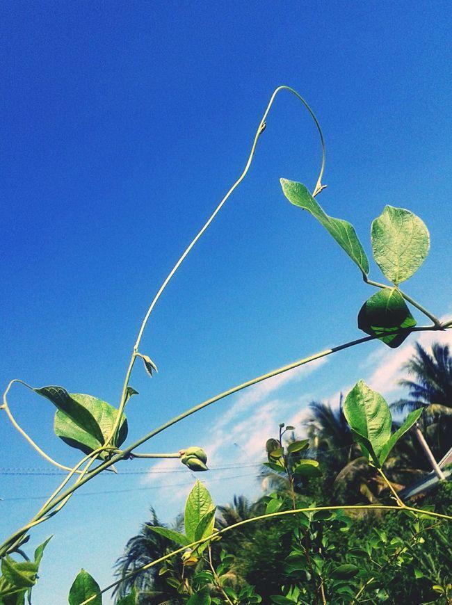 Tree And Sky Blue Sky Havenice Flyinthesky Daydreams♡