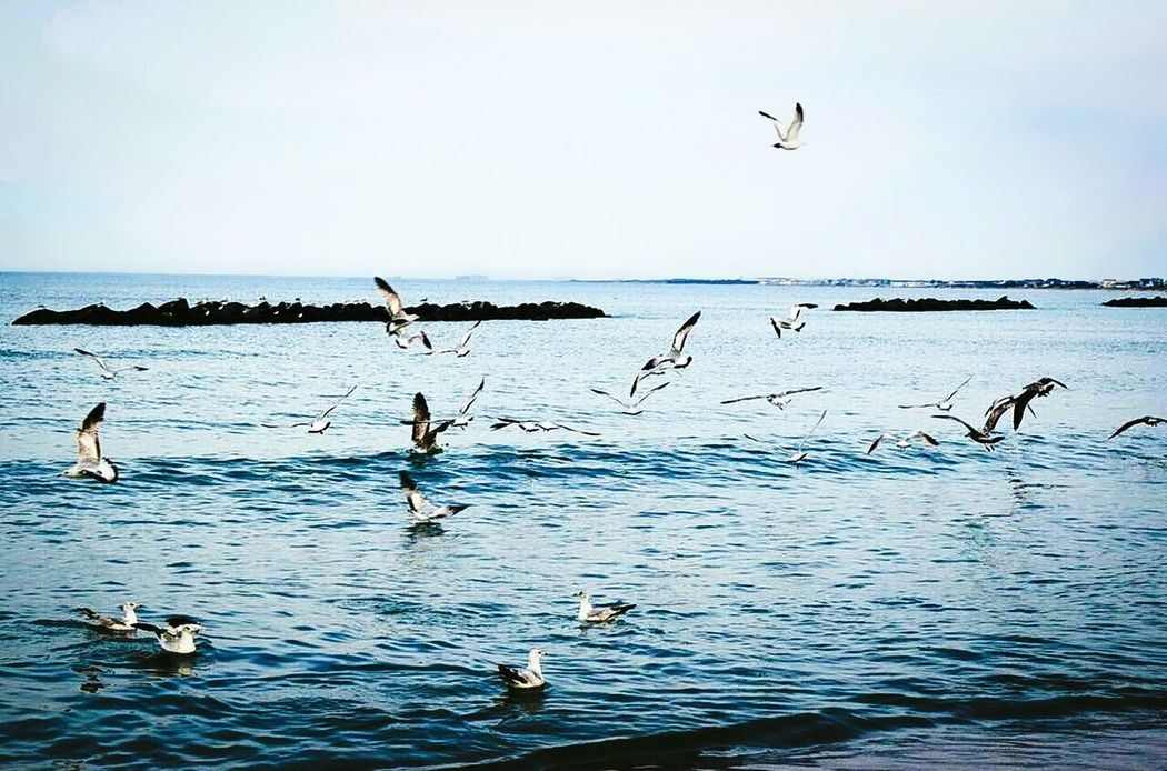 Went for a walk on the beach and became a photographer for the moment. Birdsinflight Beachphotography Rocky Beach Seagulls And Sea Waves, Ocean, Nature Ocean View Flock Of Gulls