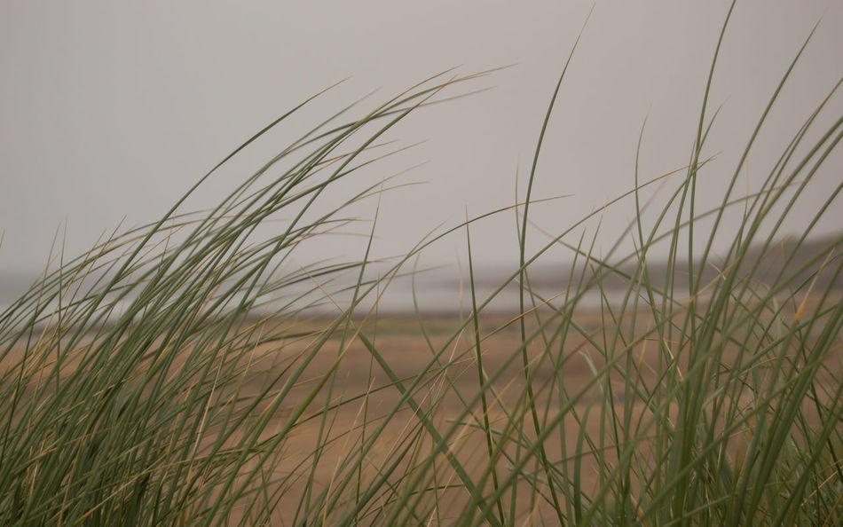 Beach Beachphotography Beauty In Nature Burren Clare Close-up Grass Growth Idyllic Ireland Misty Morning Nature No People Non Urban Scene Outdoors Rural Scene Sand Dune Tranquil Scene Tranquility Wild Atlantic Way Scenics Nikonphotography Fanore, Ireland Freshness Sea