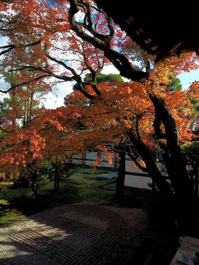 Autumnbeauty Autumn Leaves at Ninna-ji 仁和寺 Kyoto, Japan