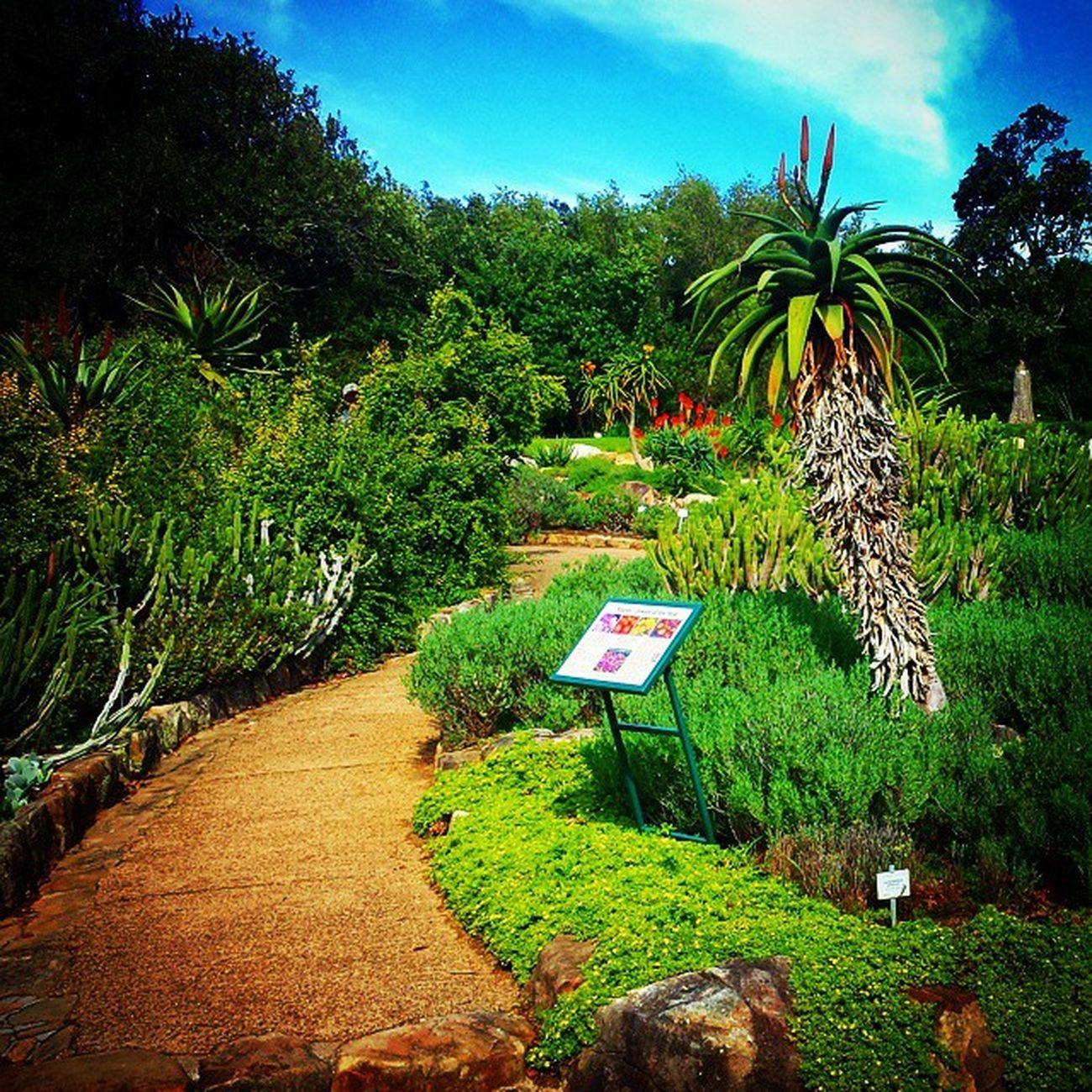 Botanicalgarden Botanicalgardens Southafrica Garden Gardening Urbangardening Tropical Tropicalgarden Garden Trees Tree Tropicalgardens Capetown Nature Flower
