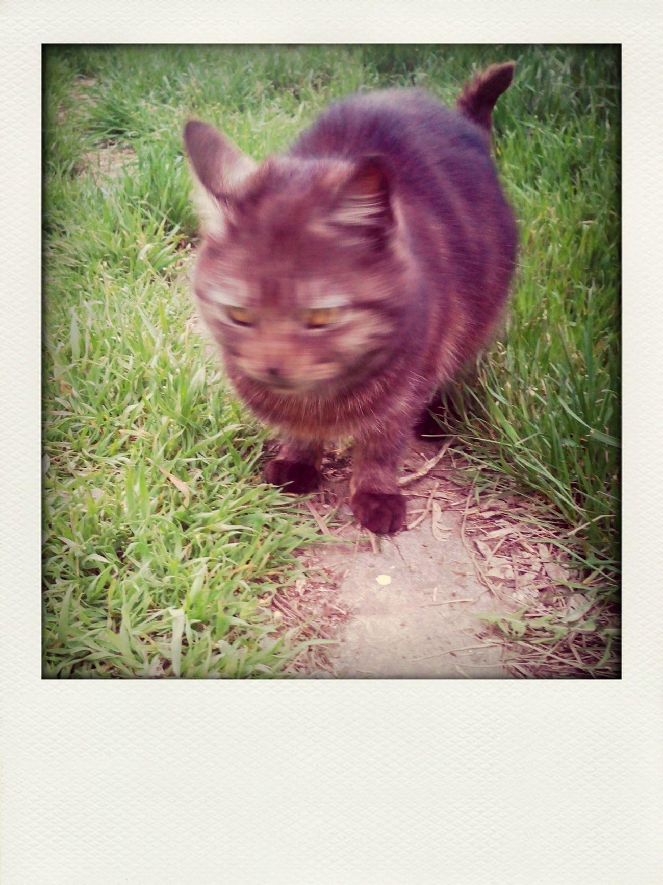 норм коту