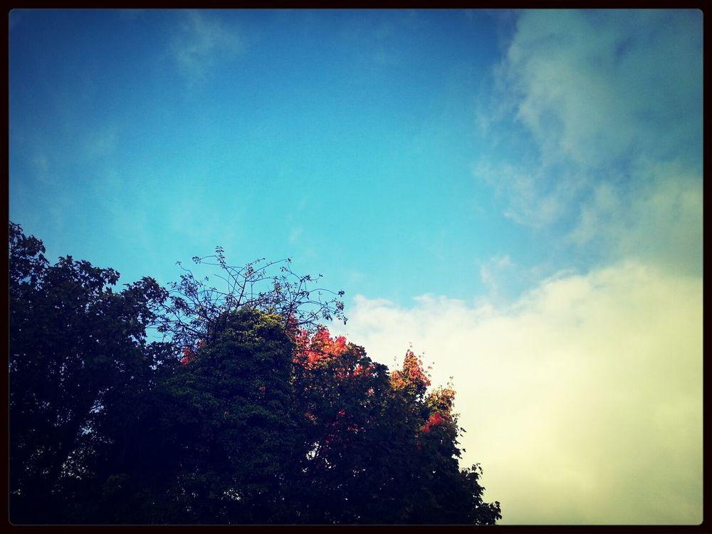 herfstblaadjes, herfstkleuren, herfstluchten, herfstgeuren - ik hou van Herfst :-) Autumn