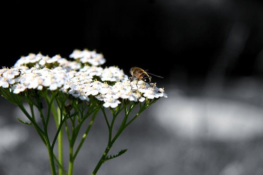 Insect One Animal Flower Animal Wildlife Focus On Foreground Close-up Nature Plant No People Day Nature Reserve Living Organism Outdoors Beauty In Nature Flower Head Animal Themes Animals In The Wild Hoverfly
