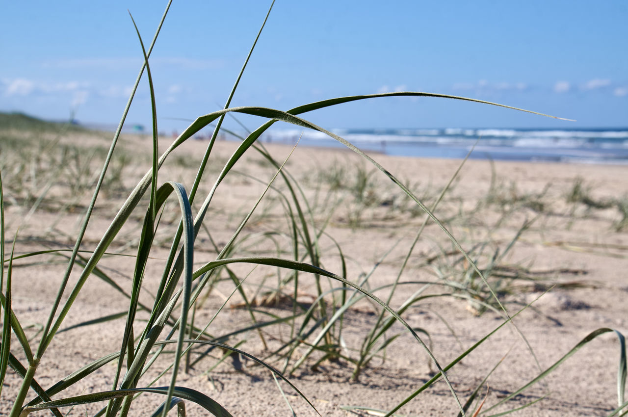 Beach Beach Life Beach Photography Beachphotography Beauty In Nature Close-up Focus On Foreground Grass Growth Horizon Over Water Landscape Nature Outdoors Plant Sand Scenics Sea Shore Sky Tranquil Scene Tranquility Water Landscapes With WhiteWall The KIOMI Collection