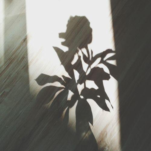 Peony  Shadow