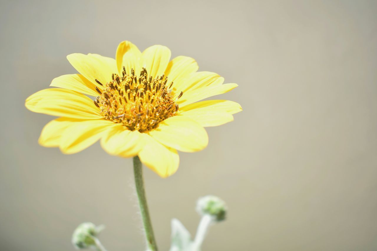 flower, petal, fragility, flower head, freshness, nature, beauty in nature, growth, yellow, plant, no people, pollen, day, close-up, blooming, outdoors, animal themes