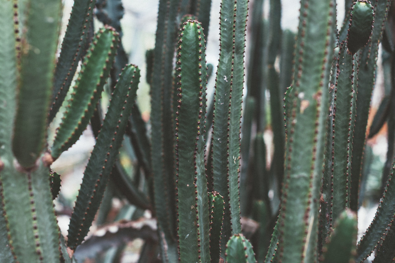 Backgrounds Beauty In Nature Cactus Day Full Frame Green Color Growth Italy Landscape Leaf Nature No People Outdoor Photography Outdoors Plant Prickly Pear Cactus Spiked Thorn Travel Travel Destinations