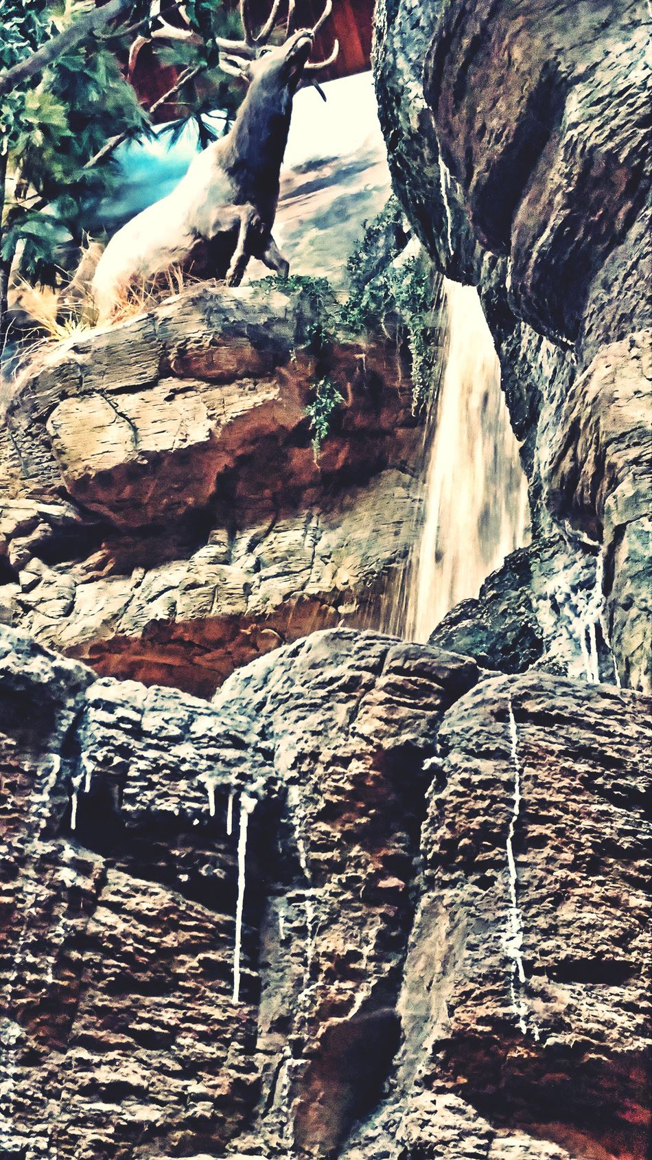 Deer Rock - Object Day Nature Outdoors No People Deer EyeEm Gallery Popular Photos Alleyezonmayphotography Tranquility Waterfall Close-up Nature Mesa Arizona Check This Out