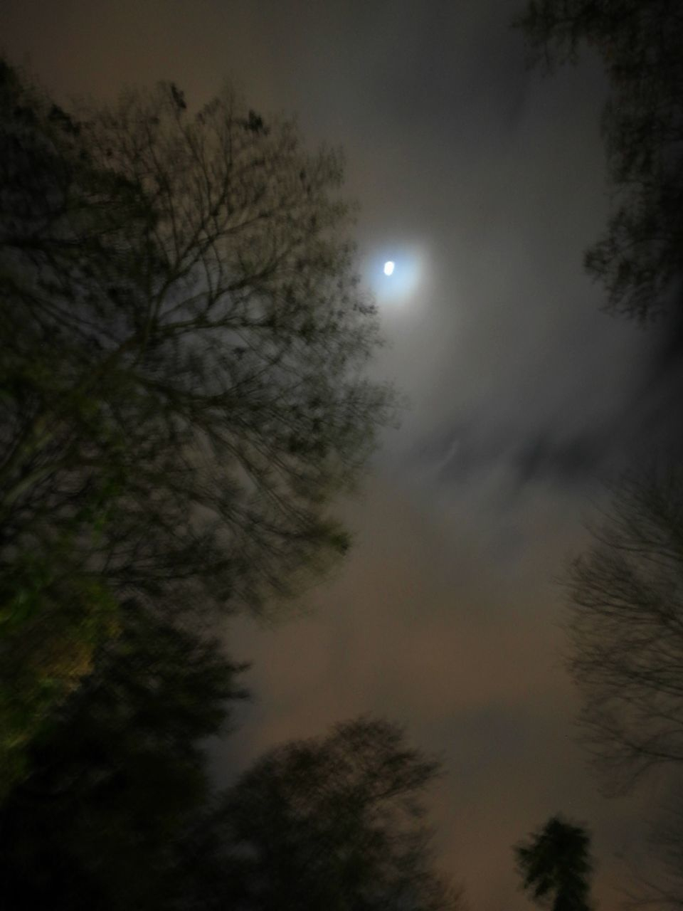 moon, tree, nature, sky, beauty in nature, low angle view, scenics, tranquil scene, outdoors, no people, tranquility, cloud - sky, night, astronomy