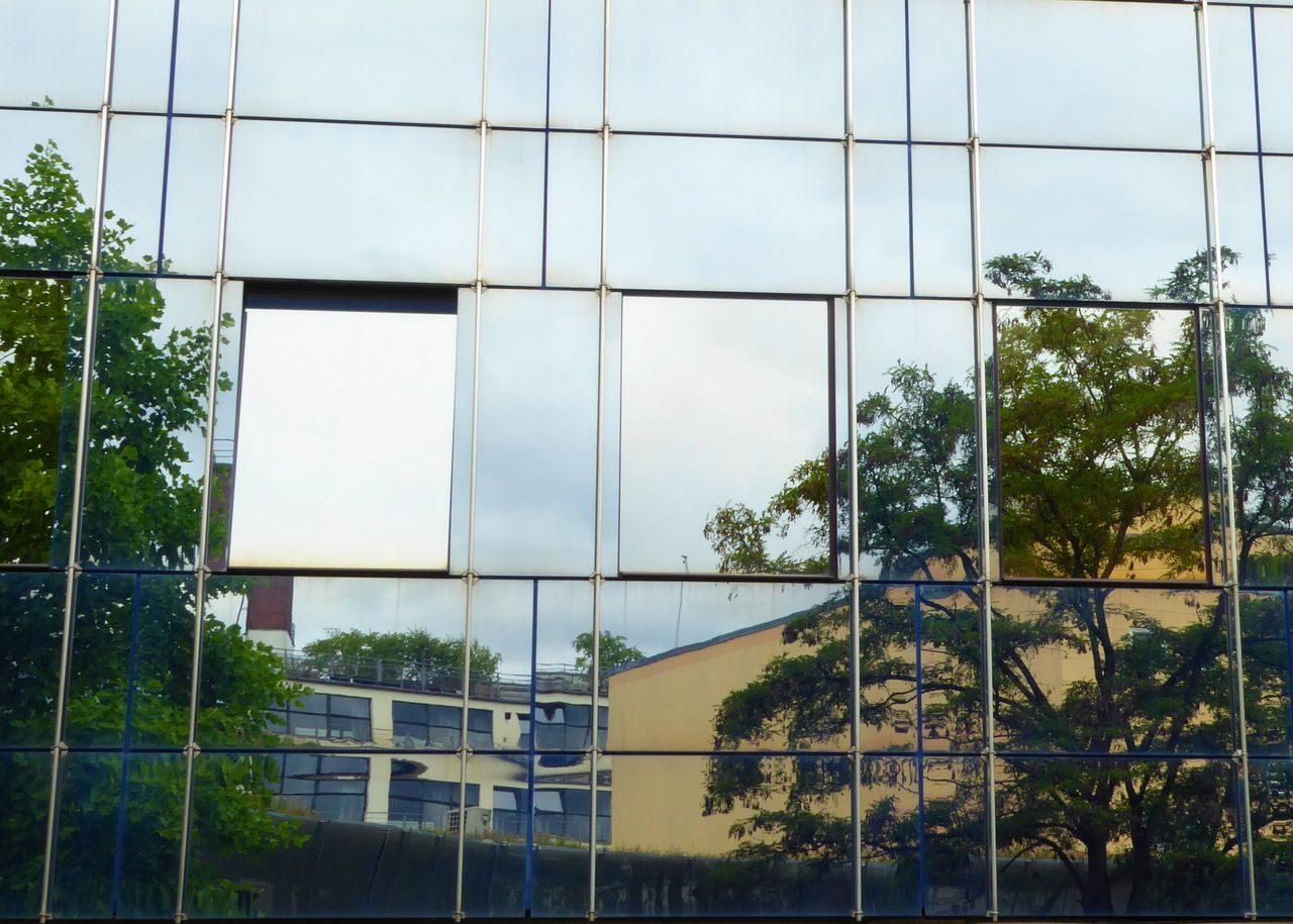 Reflection Of Trees On Glass Building