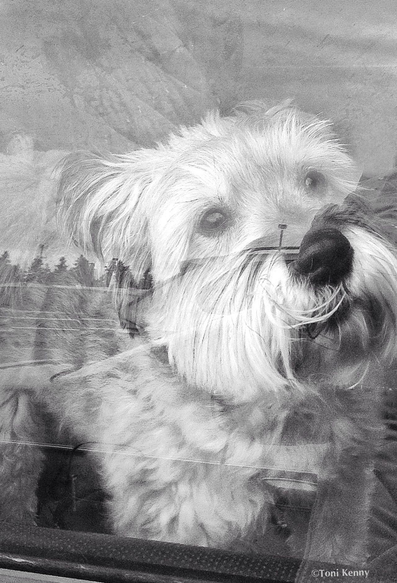 Dogs in Car Window Series - 3 EyeEmbestshots EyeEm Masterclass AMPt Community EyeEmBestPics