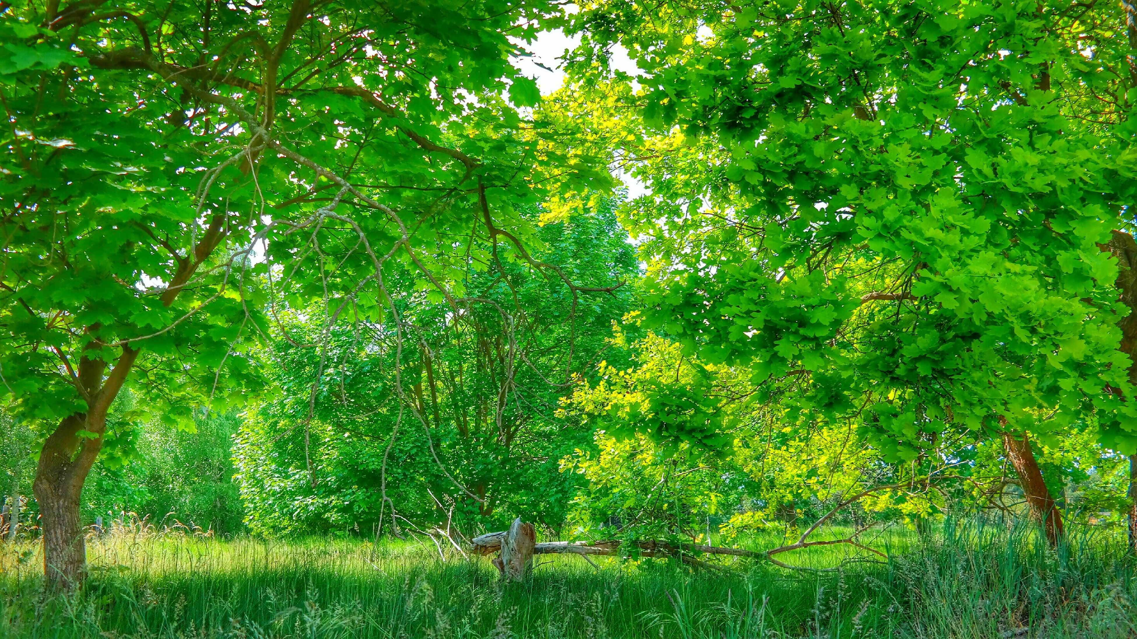 tree, growth, green color, tranquility, grass, branch, nature, beauty in nature, field, lush foliage, tranquil scene, plant, park - man made space, tree trunk, sunlight, growing, scenics, green, day, outdoors