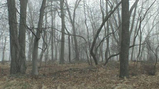 New Jersey Woods, . Early Spring Trees Springtime Cold Weather Taking Photos New Jersey Outdoor Photography Outdoors Photograpghy  In The Woods Naturephotography Nature Photography Outdoors Photography Enjoying Nature New Jersey Photography My Travels Historical Site Digital Photography New Jersey Parks New Jersey ! Tree Porn Foggy Morning Fog Foggy Landscape The Garden State