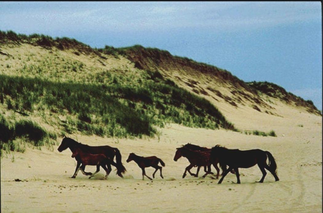 Landscape Ile De Sable Nationalpark Canada
