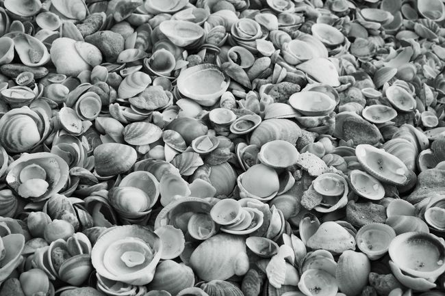 Rocks Rock - Object Ocean Nature Nature Photography Coastline Coast Beach Outdoor Photography Contrasting Colors Shells Seashore Cockleshell Collection Cockles Seashells Horizon Over Water The Great Outdoors - 2016 EyeEm Awards Blue And White Black & White Black And White Outdoors