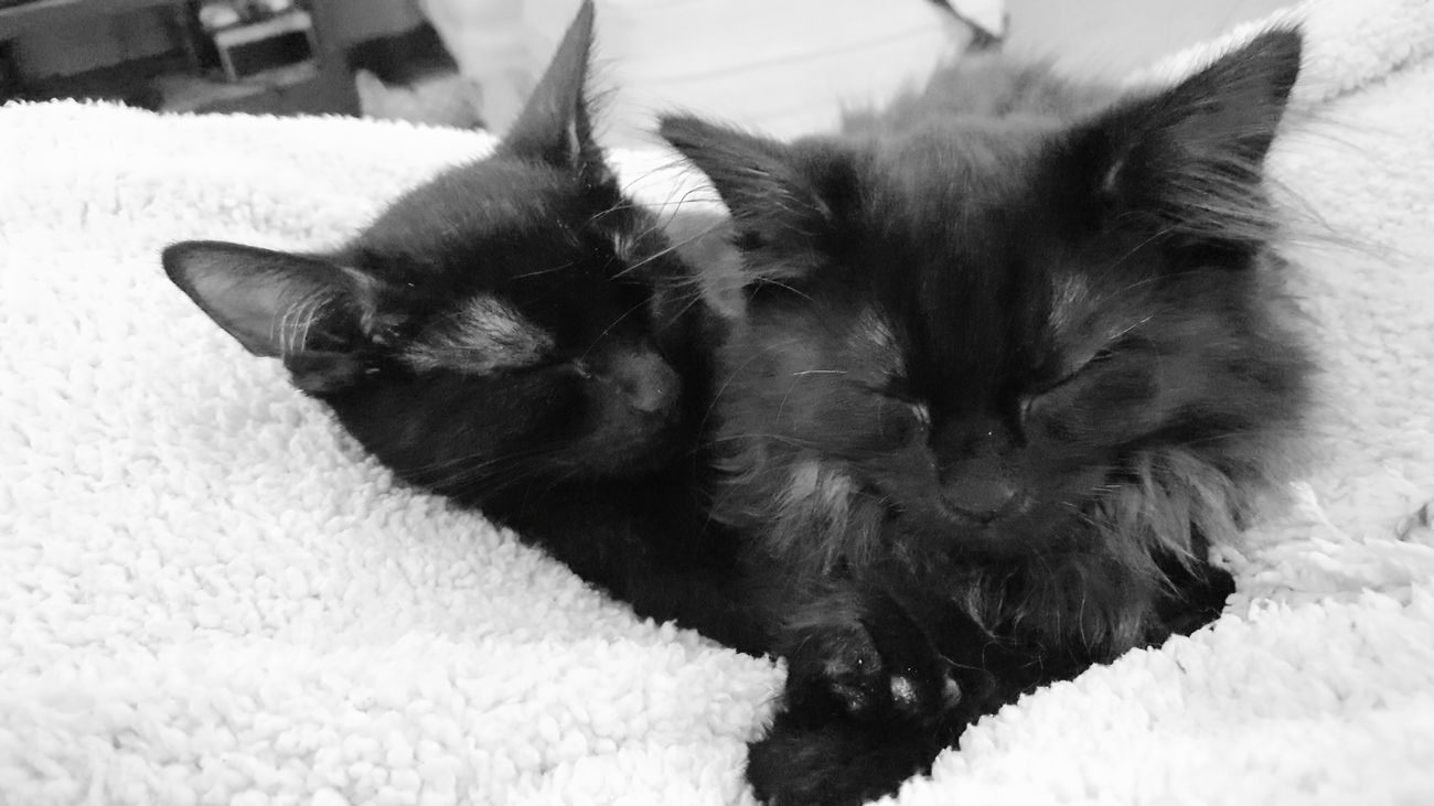Pets Close-up No People Animal Themes Black Cat Black Cats Black Cats Lovers Black Cats Are Beautiful Black Cat Photography Black & White Photography