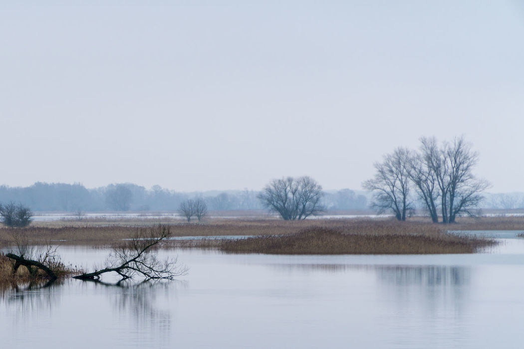 Landsscape photography in the area of Oderbruch in Germany. Bare Tree Beauty In Nature Clear Sky Cold Temperature Copy Space Day Lake Landscape Nature No People Outdoors Reflection Scenics Sky Snow Tranquil Scene Tranquility Tree Water Waterfront Winter