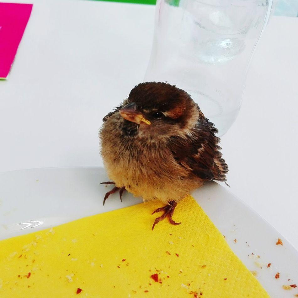 Passerotto A New Friend Un Nuovo Amico Spatz Sparrow Riva Del Garda Trentino  Italy Gardasee