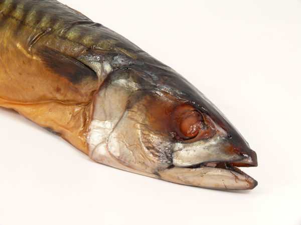 Animal Body Part Animal Themes Close-up Day Domestic Animals Dryed Dryed Fish Fisch Fish Indoors  Makrele Mammal No People One Animal Pets Räucherfisch Sea Life