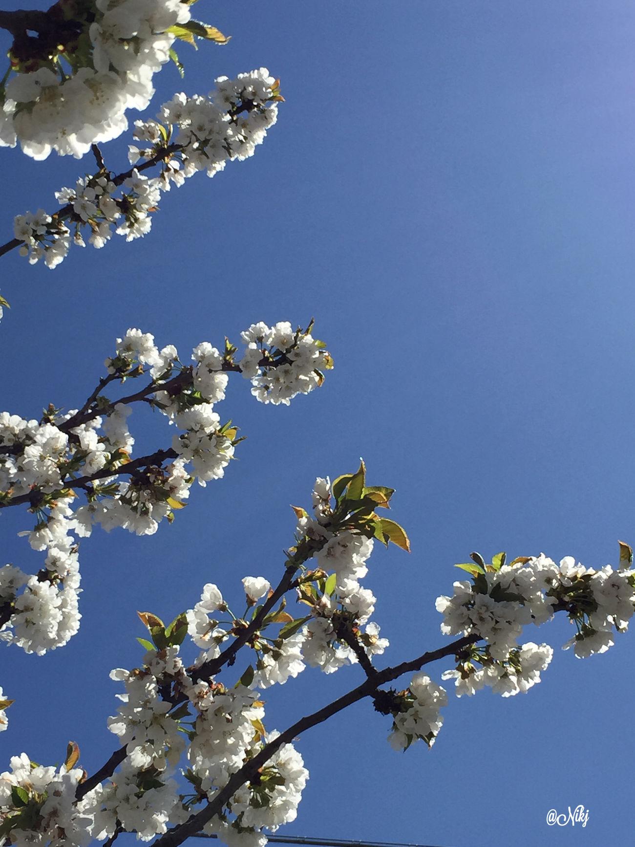 Voglio che tu sappia Una cosa..... Tu sai com'è questa cosa ...🌹 Sunset #sun #clouds #skylovers #sky #nature #beautifulinnature #naturalbeauty Photography Landscape ? Flowers,Plants & Garden Particolaristupendi Nature Collection 🌹 Rsa_nature 😉 Nature_collection