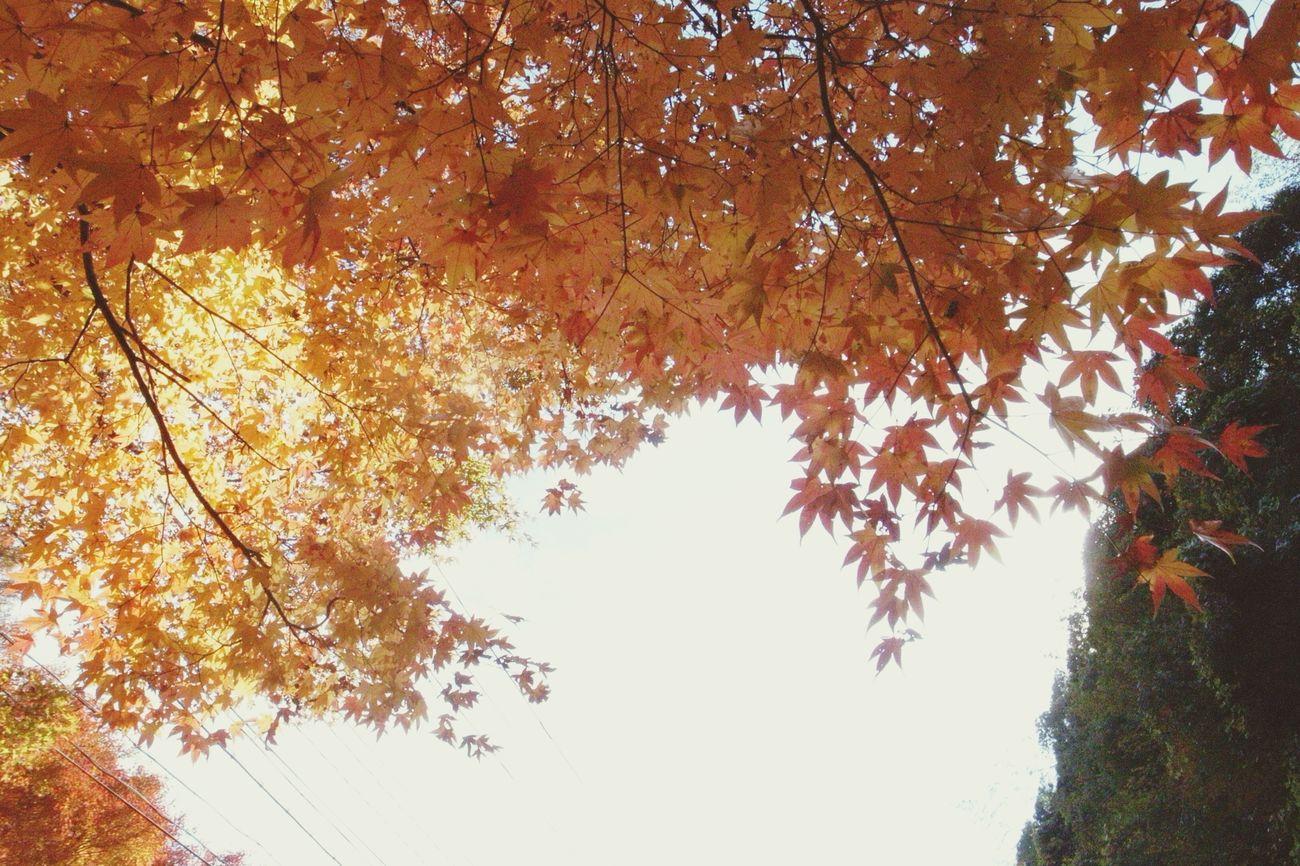 紅葉 Autumn 紅葉狩り