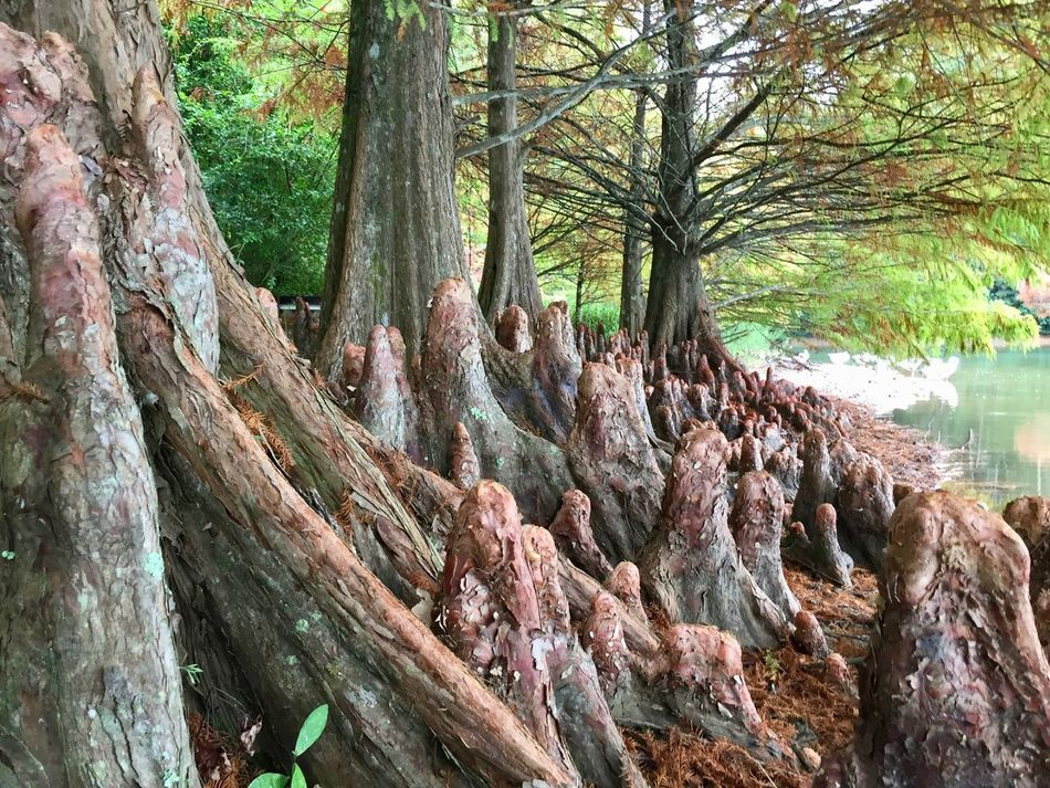 Looks like a gnome world...interesting roots! Beauty In Nature Branch Day Forest Gnome Green Growth Lake Nature No People Outdoors Park Roots Roots Of Tree Tranquility Tree Tree Trunk Trees Trunk Art Is Everywhere