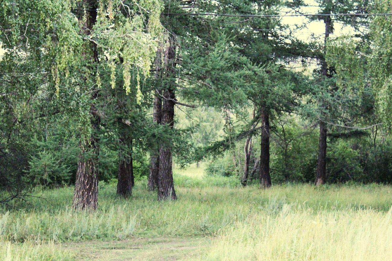 Gectorfontroy Ural Bashkortostan Beautiful Russia Forest Russian Nature Naturelovers Uchaly