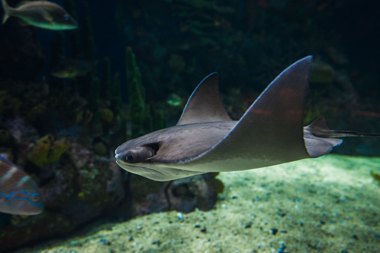 Beautiful stock photos of fish, Animal, Animal Themes, Animals In The Wild, Day