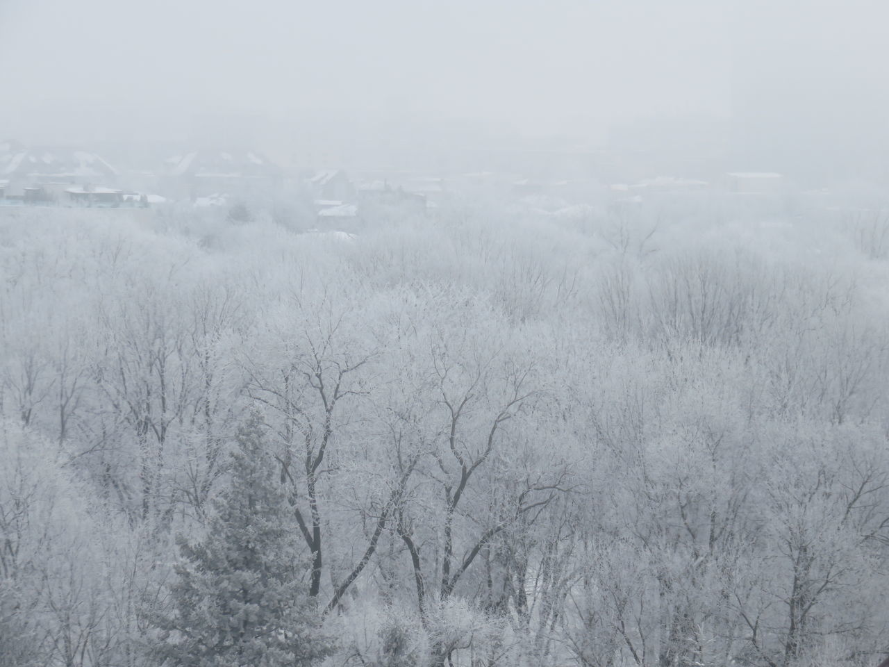 Beauty In Nature Cold Temperature Day Fog Landscape Nature No People Outdoors Scenics Sky Snow Snowing Tree Winter