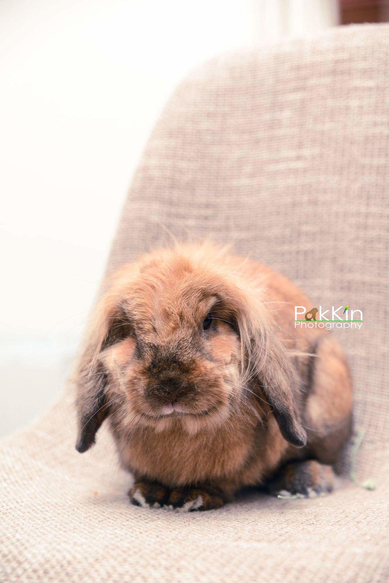 Rabbit ❤️ One Animal Pets Bunny 🐰 First Eyeem Photo