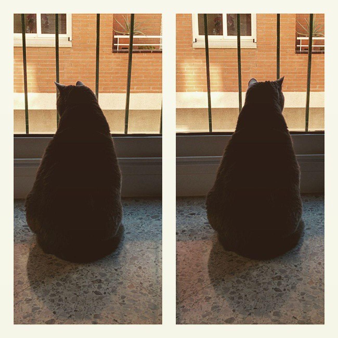 Tu mira per la dreta i jo per l'esquerra Espies Spy Instacats Cats watchcats igers igerscatalunya insterrassa