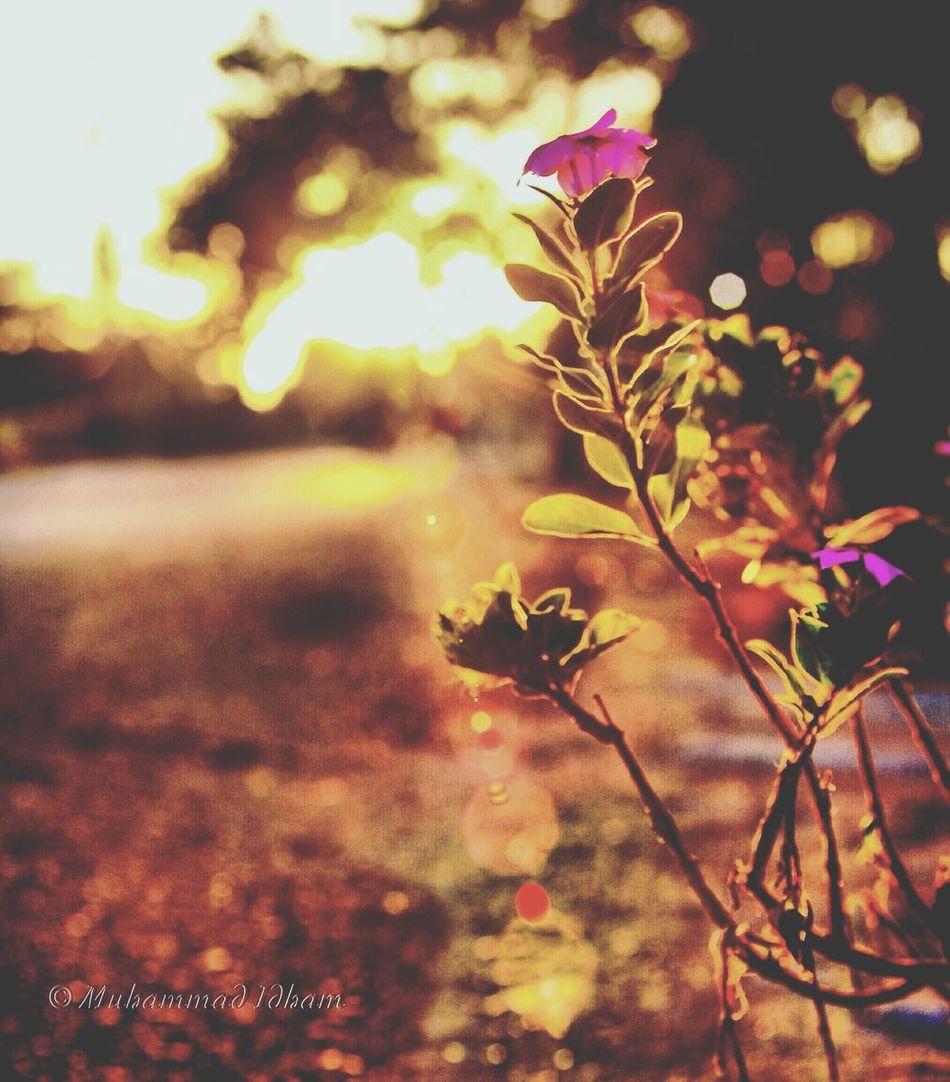 Good Morning Gorontalo, Good Morning Indonesia, & Good Morning EyeEm people! ( ´ ▽ ` )ノ おはよう! EyeEm Eye4photography Sunrise EyeEm Best Shots - Nature