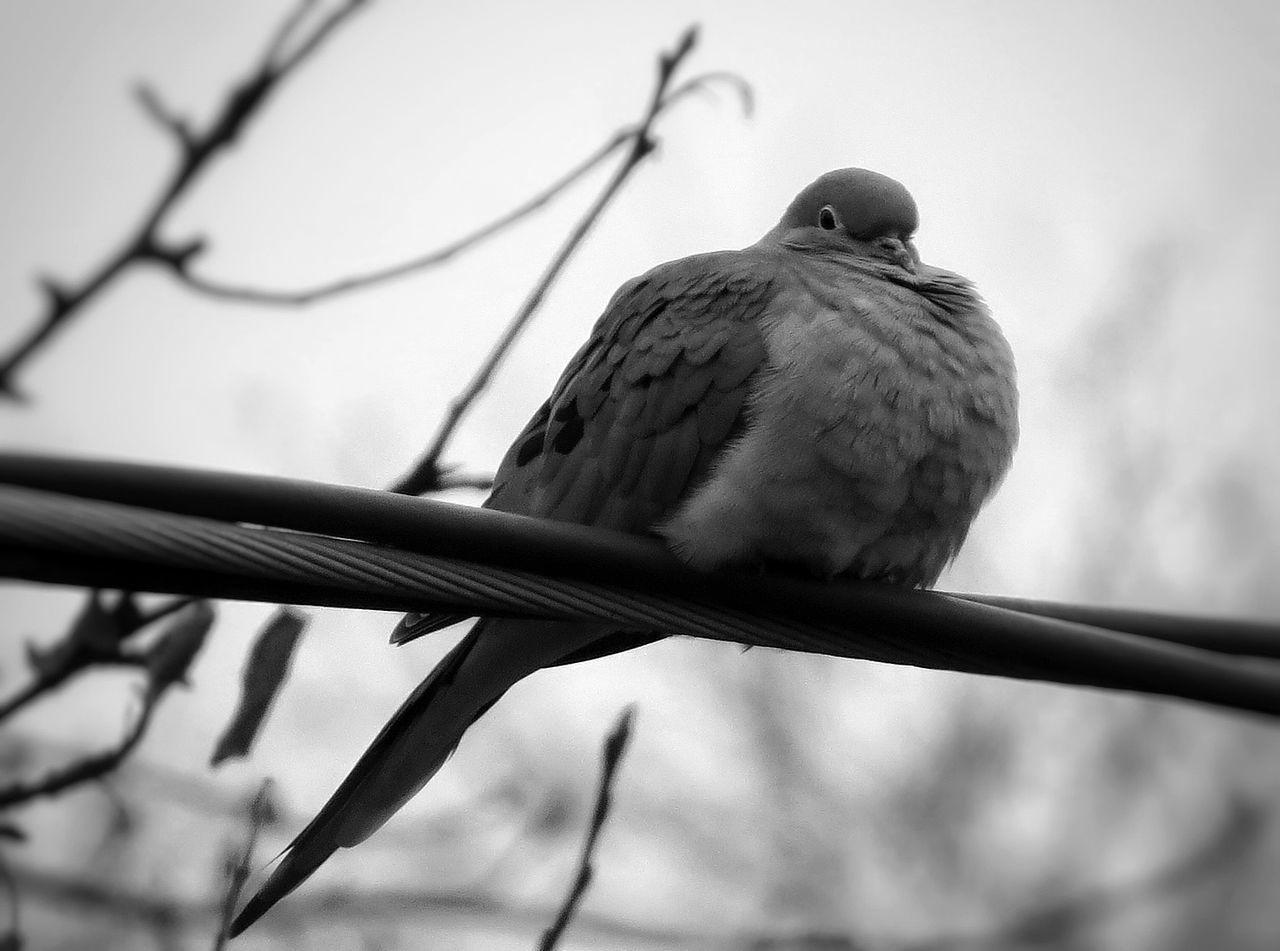 Beautiful stock photos of friedenstaube, Bird, Clear Sky, Day, Focus On Foreground