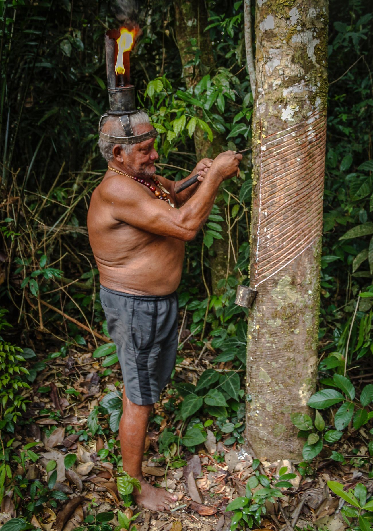 Lifestyles Standing Person Plant Working Caoutchouc Jungle Life Amazonas Fire On Head Fire Lamp Brazil