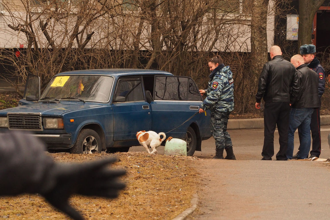 Police dog accidently poops during anti-terror action, Saint-Petersburg, Russia. Antiterror Antiterrorism Car Day Dog Domestic Animals K9 K9 Dogs Land Vehicle Mammal Men Nature One Animal Outdoors People Pets Police Policeman Pooping Pooping Pose Real People Road Terrorist Attack Transportation Women