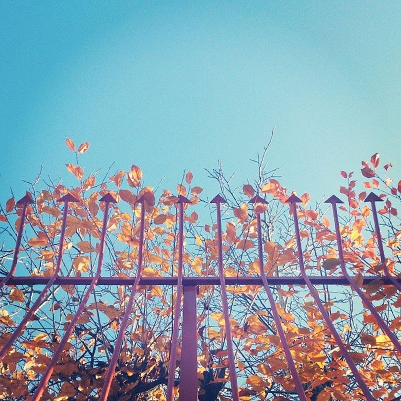 Iran Hamedan Sky Fall Atumn Trees Branches Fence Leafsپاییز برگ شاخه درخت حصار آسمان