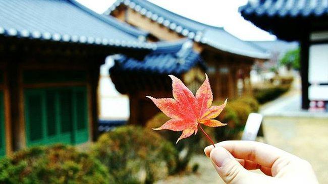 가을 단풍 부석사 2015  Fall Beauty Mapleleaf Temple Making Shots