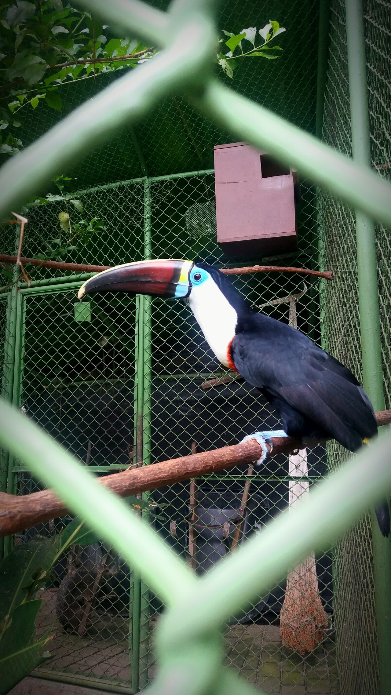 Bird Nature Beauty In Nature Tucan