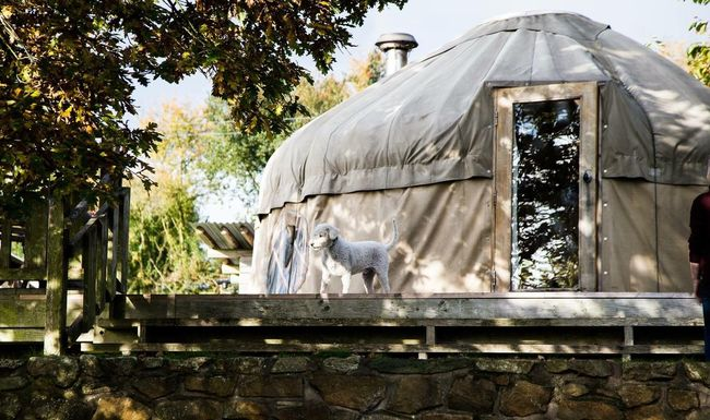 Yurt - Glamping holiday Built Structure Day Tree Architecture Nature Outdoors No People No Phones Family Values Traditional England🇬🇧 Yurts Glamping Countryside Holiday Vacations Break Wellbeing